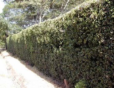 Impenetrable Hedges