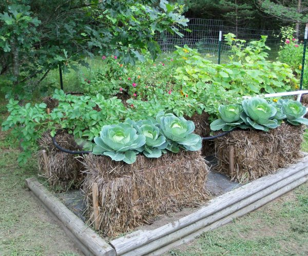 Straw Bale Planting: For Limited Space or Bad Backs