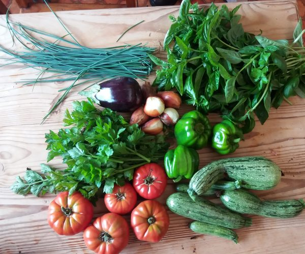 Planning Your Vegetable Garden: Part One