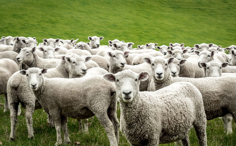 Govt gives go-ahead for another livestock shipment