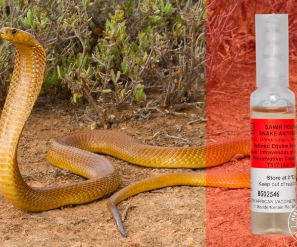Snakebites and antivenom in South Africa