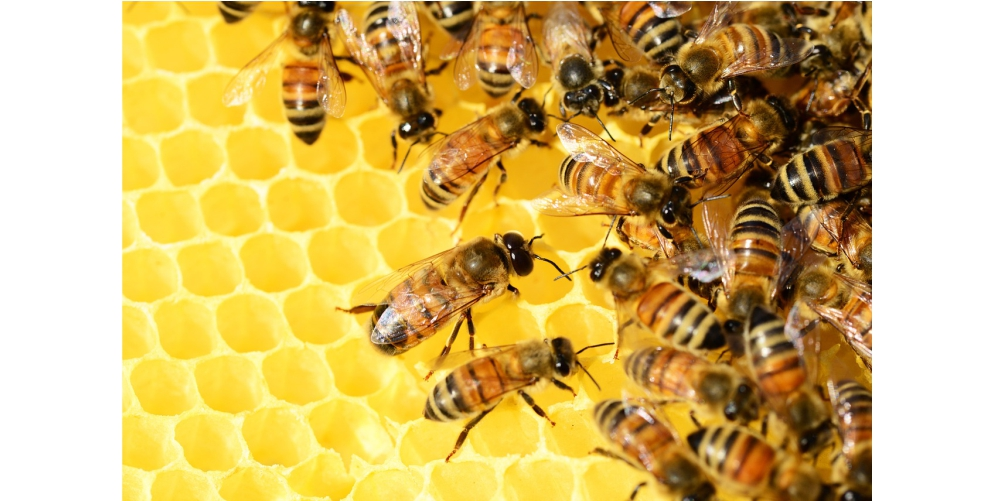 Register now for Honey Fraud workshop