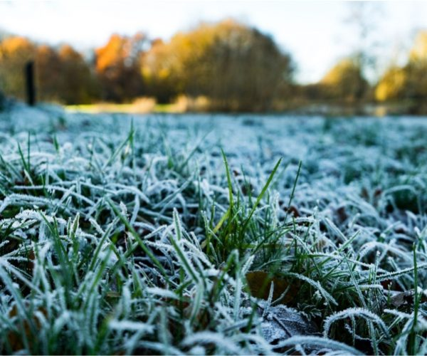 It's time to start preparing for frost
