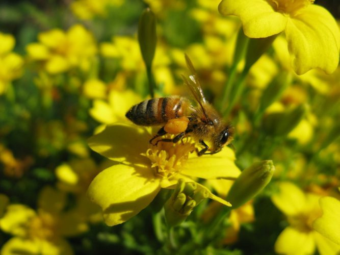Six Steps for Supporting Bees