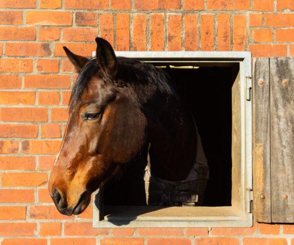 Providing Adequate Housing for Livestock
