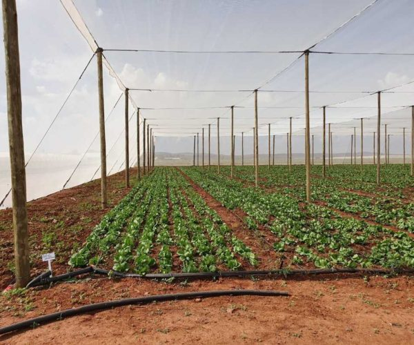 Drip Irrigation: Best for Shade Cloth Structures