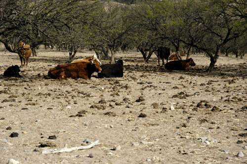 Combating Desertification: A Smallholder's Responsibility