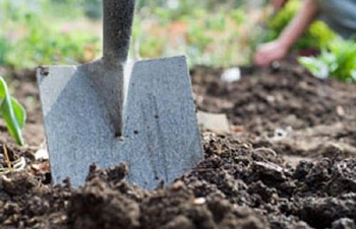 Taking Samples for Soil Testing