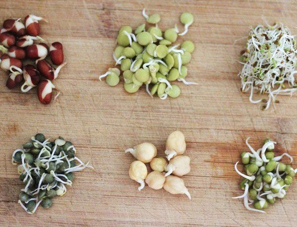 Growing Sprouts: a Different form of Cultivation