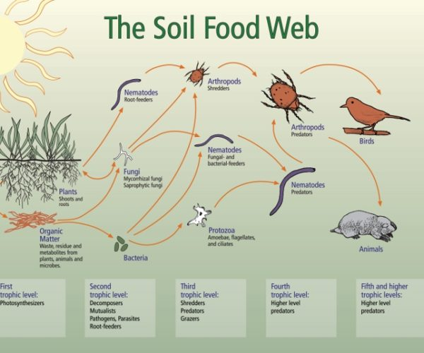 The Soil Food Web: A World Under Our Feet