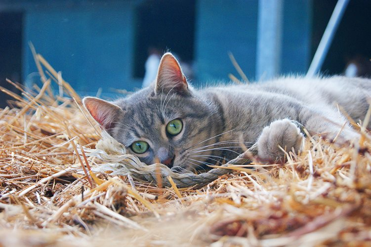 Keeping Cats on Smallholdings
