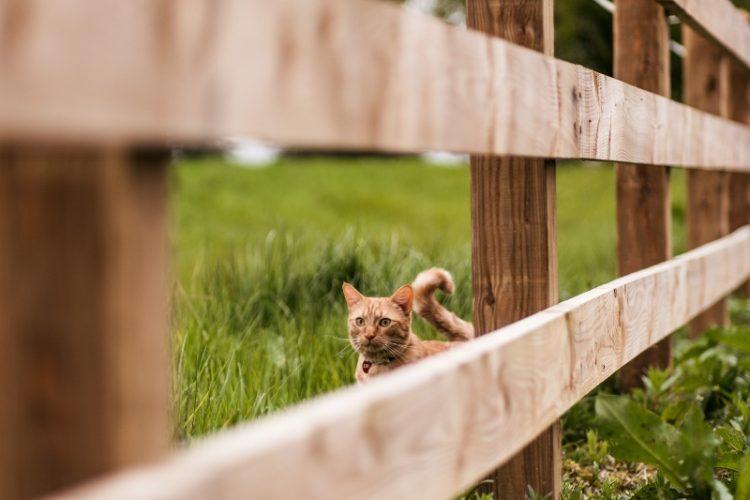 Cat on smallholding