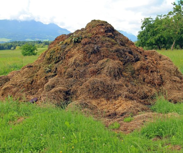Using Manure For A Good Harvest