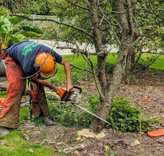 The Use of Chainsaws on Smallholdings
