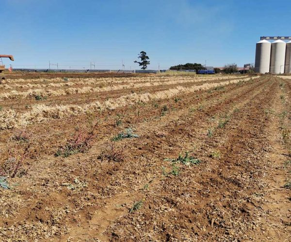 Ekurhuleni Opens Applications for Leasing Agricultural Land