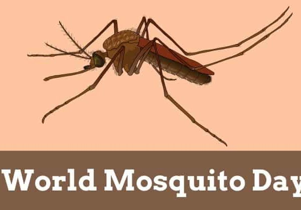 It's World Mosquito Day