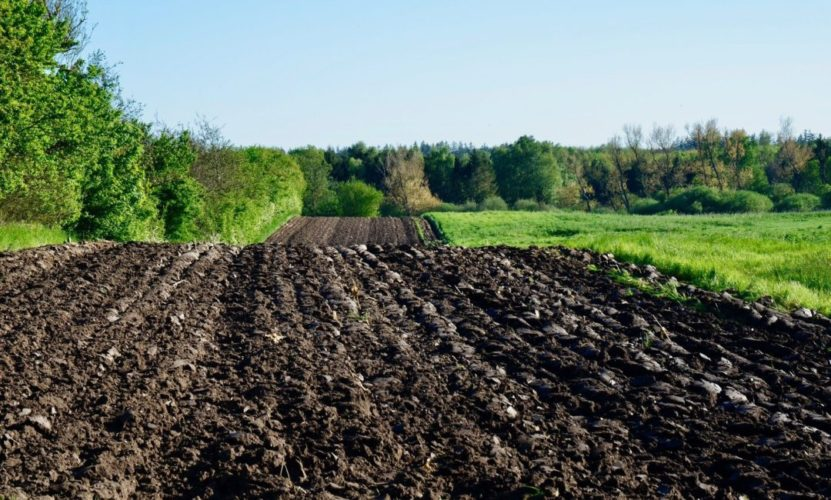 Understand the Basics of Cultivation