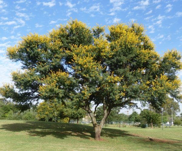 Plant the Common Tree of the Year 2021