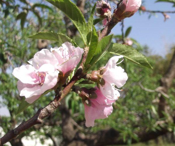 Celebrate the Spring Equinox