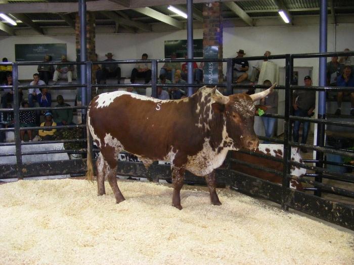 auctioning livestock