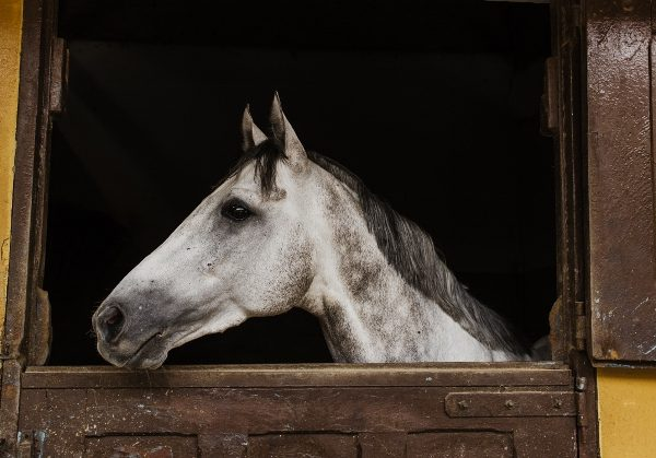 What You Need To Know Before Buying A Horse