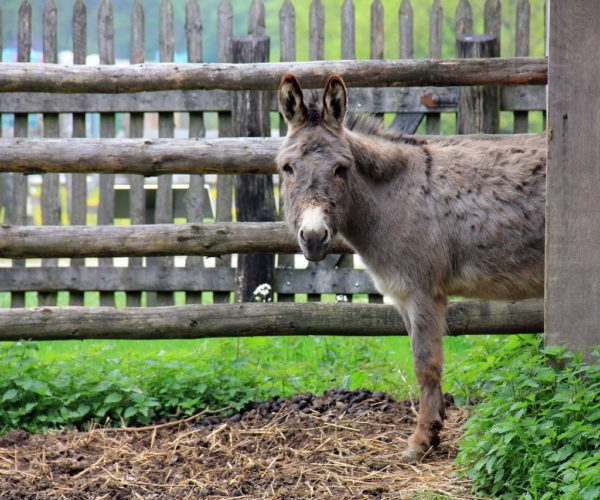 Equine Theft: A Growing Scourge